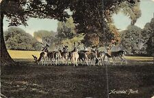 POSTCARD  SUSSEX  ARUNDEL  PARK   The  Deer