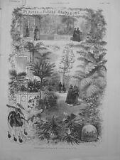 1878 I12 NATURE ETS HORTICOLE LINDEN RUE PAIX PLANTE FLEUR EXOTIQUE CARNIVORE 1