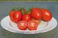 De Barao Heirloom Tomato Seeds- 50+ 2015 Organic Seeds- Great For Canning/Sauce