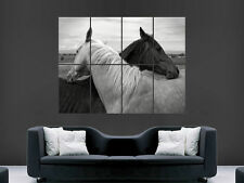 ARABIAN HORSES POSTER ANIMALS BEAUTIFUL WALL ART PICTURE PRINT LARGE  HUGE