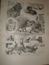 The band of kindness Donkey and Pet Show manchester 1886 old prints ref BW