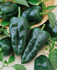 "50+ HEIRLOOM HOT PEPPER SEEDS - ""ANCHO GRANDE - PABLANO""  NON-GMO, MILD PEPPER!"