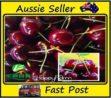 Direct US Cherries Cherry Tree Seed Dwarf Cherry Tree Fruit Seed 5 Pcs