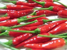 Chi-Chien Chill/Chili Pepper,1000 Seeds-Hot and Colorful- from China !Heirloom !