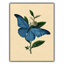 VINTAGE BUTTERFLY METAL SIGN WALL PLAQUE Print Wall Art Illustration