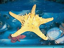 "8"" to 10"" KNOBBY STARFISH SEA SHELL  BEACH DECOR NAUTICAL TROPICAL REEF"