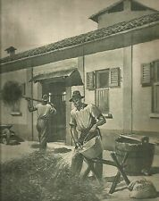 K0421 Agricoltori spruzzano sale pastorizio sui foraggi - Stampa antica