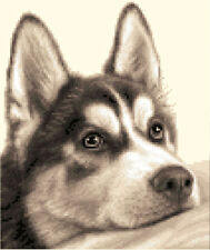 SIBERIAN HUSKY dog - complete counted cross stitch kit + all materials