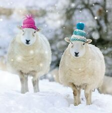 Charity Christmas Cards Cute Sheep In Woolly Hats Gloss Finish Xmas - Pack 5