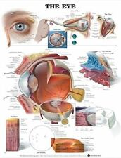 ANATOMY OF THE HUMAN EYE POSTER (66x51cm) ANATOMICAL CHART BODY DOCTOR OPTOMETRY