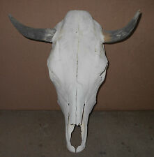 "NEW 15 1/2"" wide STEER SKULL HORN,LONGHORN,cow,bull,Mexico,FEED taxidermy,head"