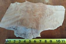 "Live Edge Maple Burl Kiln Dried Slab Turning Blank 10""x5 1/2"""