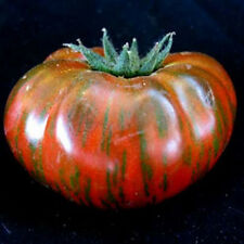 "Chocolate Stripe Tomato *Heirloom* (50 Seed's)  "" FREE SHIPPING""  Non-GMO"