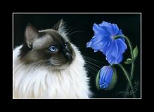 Ragdoll Cat Print Blue Poppy by I Garmashova