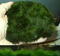 100 cm2 Pflanzmatte / Ein Bodengrund für das Aquarium & Terrarium / Wasserrasen