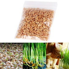 1oz/approx800 seeds New harvested cat grass 100% organic including growing guide