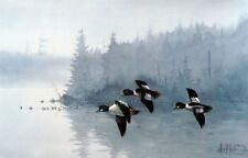 Goldeneyes A.M.  by Les Kouba Signed and Numbered Duck Print