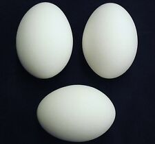 3 PACK WHITE CERAMIC DUMMY CHICKEN NESTING EGG HATCHING CRAFT POULTRY