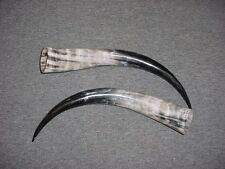 "13"" - 17"" Bull Horns Cow Horns STEER LONGHORN horns TAXIDERMY Pairs Polished"
