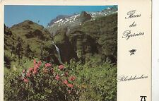 BF24537 rhododendron fleurs des pyrenees   france  front/back image