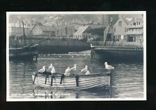 Cornwall St Ives gulls committee meeting Judges c1950/60s Proof photograph