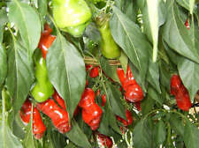 25 Hilariously Funny Unique Red Peter Pepper Seeds With A Bonus