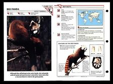 """RED PANDA"" WILD LIFE FACT FILE ANIMAL CARD/HOME SCHOOL STUDY"