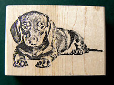 Dachshund puppy-dog rubber stamp WM 2.75x2""