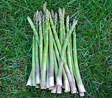 50 Seeds Asparagus Seeds Organic Heirloom Rare Green Vegetable Perennial Garden
