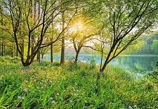 Primavera Lago Foto Wallpaper Mural De Pared Bosque Verde naturaleza National Geographic
