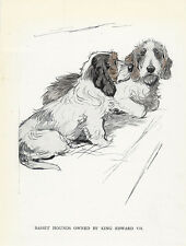PETIT BASSET GRIFFON VENDEEN DOG GREETINGS NOTE CARD TWO DOGS PBGV