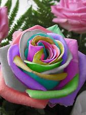 35 Regenbogen Rose Rosen Samen Rainbow Cream Seeds Gothic Gardening..
