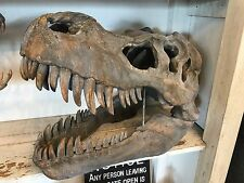 T Rex Totenkopf display Tyrannosaurus Rex Totenkopf kopieren in Kunstharz