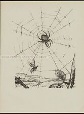 AUGUST GAUL - WASP AND SPIDER - lithography stone drawing 1920