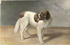 White & Brown Dog Antique Vintage French Postcard