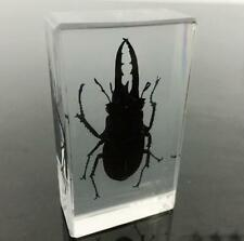 Handmade chinese Stag Beetle in acrylic paperweight real stag Specimen Taxidermy
