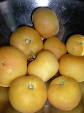 Peach Tomato - LOW ACID -  20 Seeds! COMBINED S/H! SEE OUR STORE
