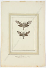 """""""Study of Butterflies"""", late 18th century, Watercolor"""