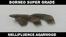 Wild Borneo Super Grade Agarwood - Earthy Incense Scent - Aloes Wood / Oud -1g