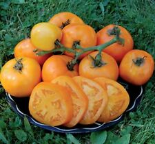 Moonglow  Heirloom Tomato 20 Seeds Moon Gardens Simply Grown Beautifully