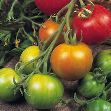 Tomato - Tigerella - 75 Seeds