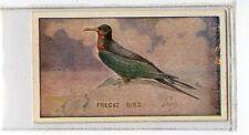 (Jb2923-100)  SNIDERS & ABRAHAM,ANIMALS & BIRDS,FREGAT BIRD,1912#