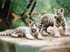 2 Prints White Tiger Cubs and Hideaway By Charles Frace