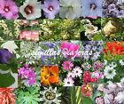 semillas de flores , arbustos y árboles - graines - samen - seeds VALE (coupon)