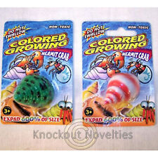 Growing Hermit Crab Grow Expand Size Large Water Animal Shell Crabs Creature