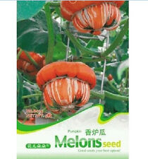 FD1235 Pumpkin Incense Seed Vegetable Seeds ~1 Pack 5 Seeds~ Free Shipping