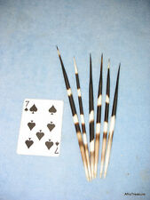 """6 RARE African Porcupine Quills 6""""-9"""" for Hair Pins, Jewelry, Arts, Crafts (7s)"""