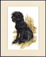 AFFENPINSCHER LITTLE SEATED DOG CHARMING PRINT MOUNTED READY TO FRAME