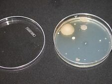 Lot 2 Nutrient Agar Petri Dishes  for Bacteria & Mold School / Science Projects