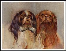 King Charles English Toy Spaniel Two Dogs Head Study Lovely Dog Print Poster